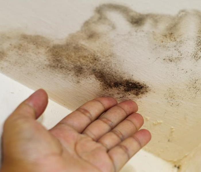 Mold Remediation The Best Way To Test For